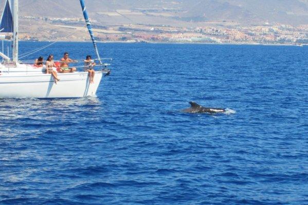 Delfíny v oceáne