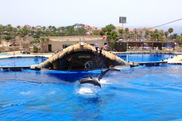 Šov delfínov v Aqualande