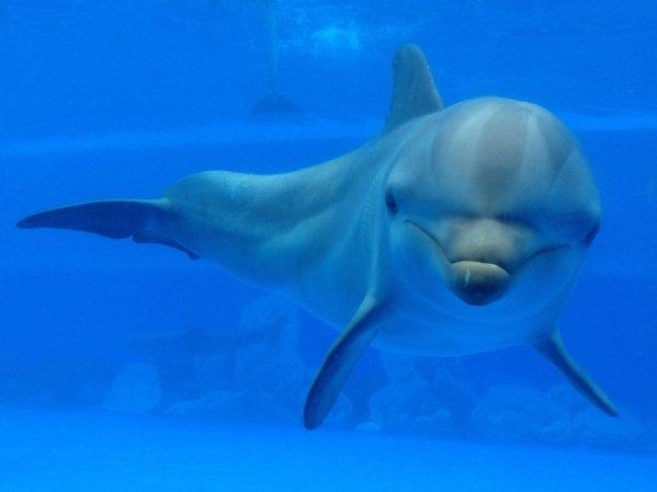 delfiny tenerife