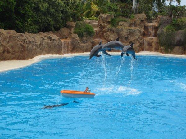 Šov delfínov v Loro Parque