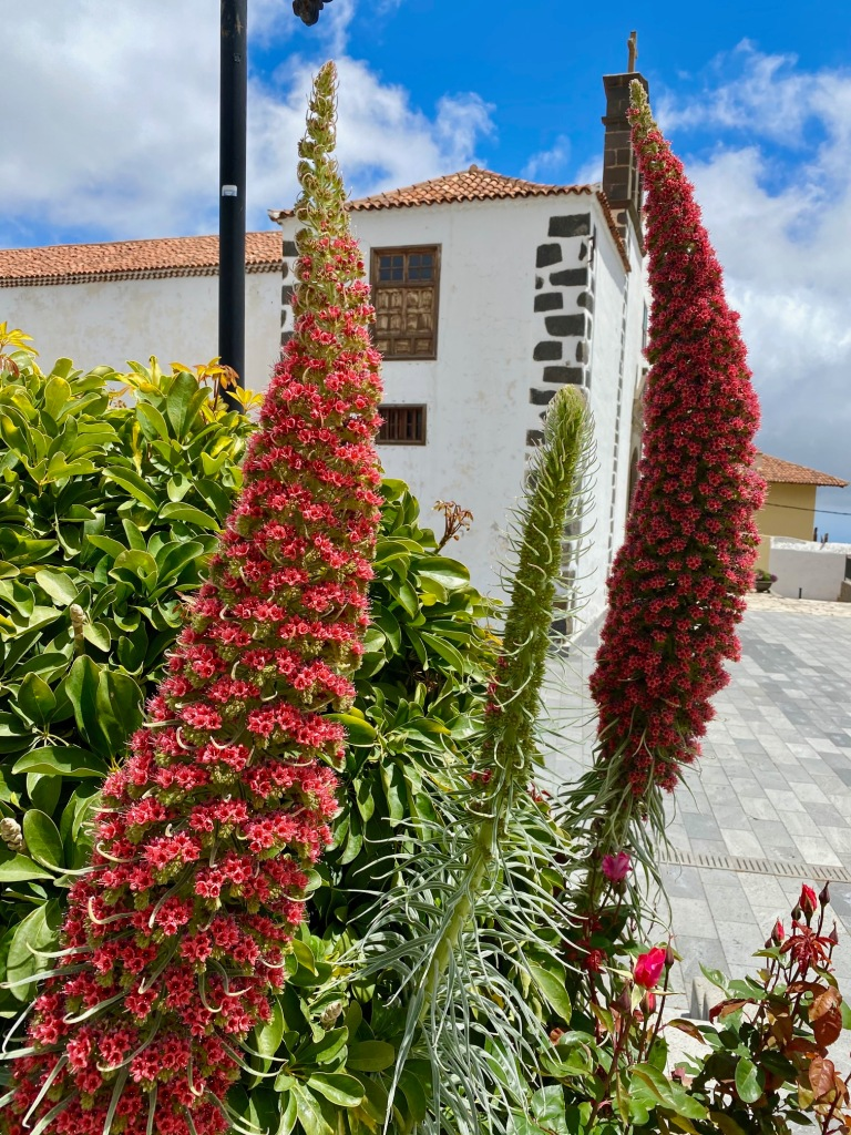 Tajinastes, Vilaflor, Tenerife